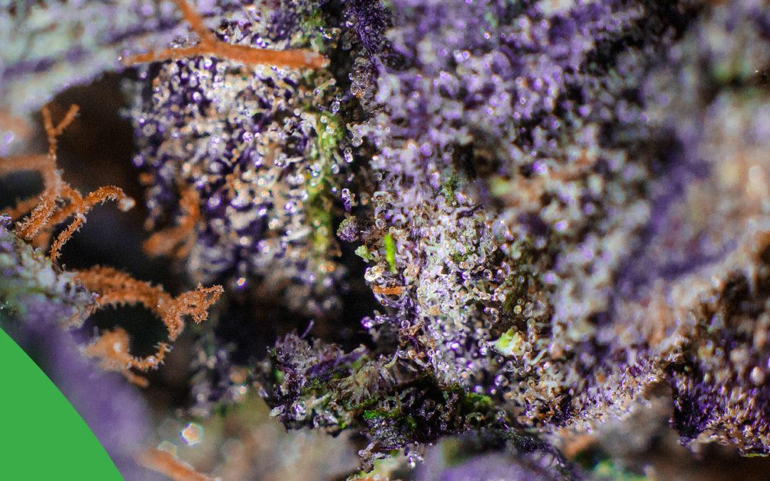¿Compras tu flores a base del por ciento de THC?
