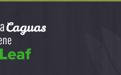 Gran Apertura Releaf Solutions en Caguas